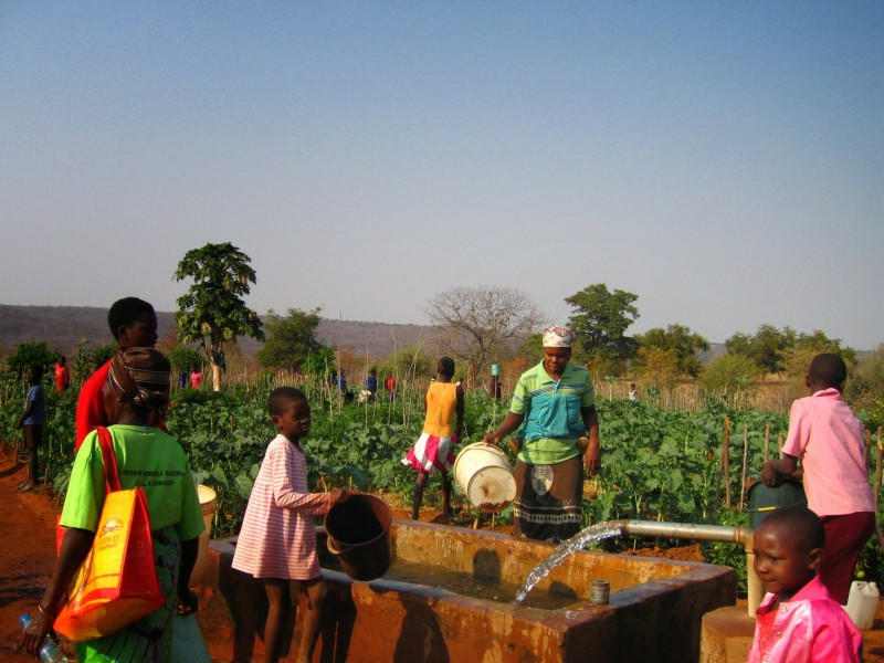 Example of regenerative agriculture in Zimbabwe