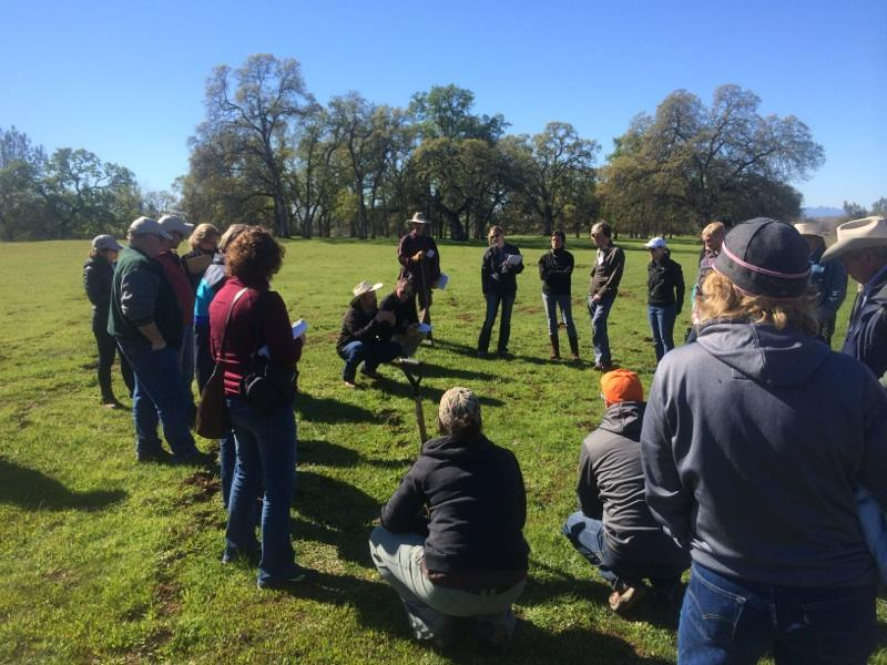 The group gathers for a pasture walk to examine soil surfaces. Photo by Darby Heffner