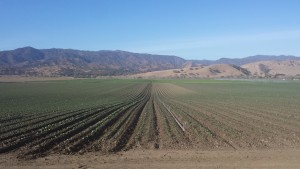 organic, industrial farming, Paicines Ranch, holistic management
