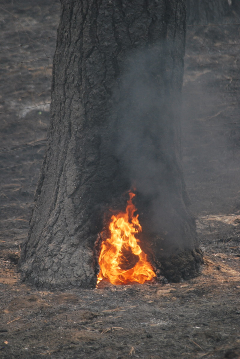 Grizzly Bear Complex Fire, holistic planned grazing, fire recovery planning