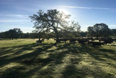 Grazing for Change 2018, Chico California, Jefferson Center for Holistic Management