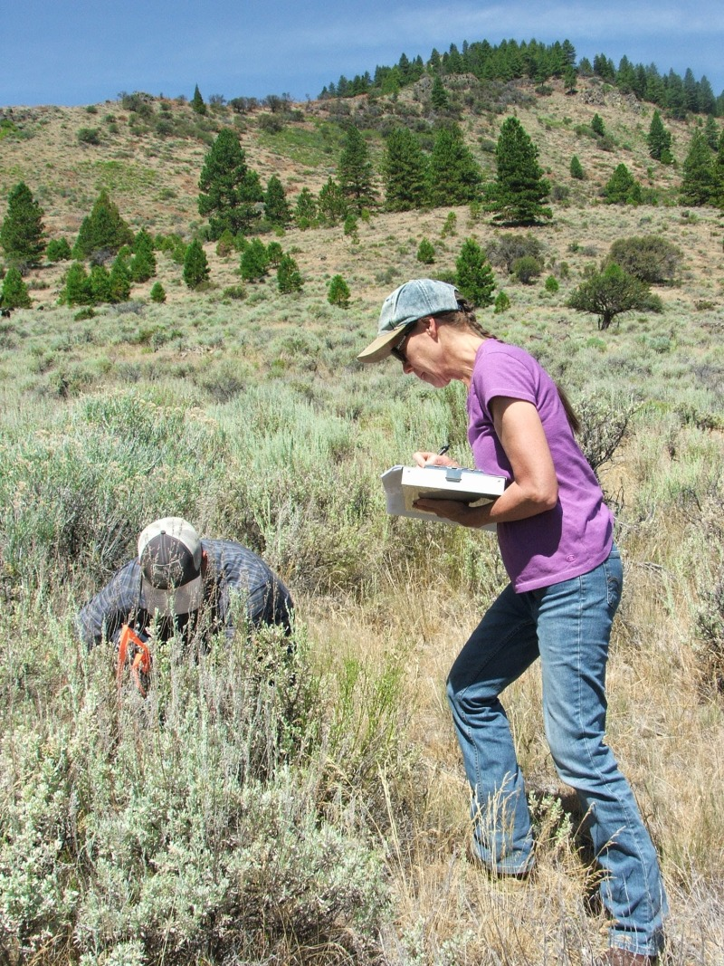 Holistic Planned Grazing: Supporting a Drought-Resilient Landscape