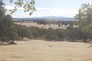Holistic management, ranches, Oroville, California