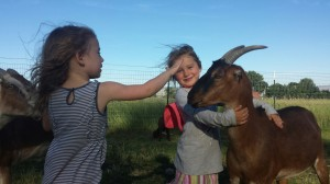 holistic planned grazing, goats, Fort Bidwell, California, Jefferson Center for Holistic Management
