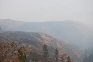 Grizzly Bear Complex Fire, rangeland, fire, holistic planned grazing