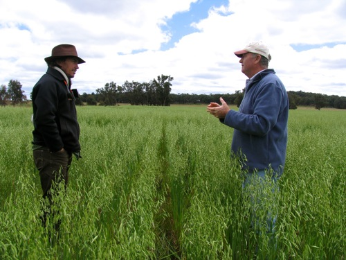 Colin Seis, pasture cropping, holistic planned grazing