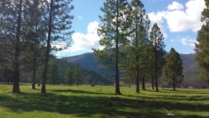 Genesee Valley, California, Clover Creek, holistic management, community dynamics