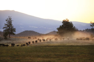 Belcampo Farm and Butchery, Jefferson Center for Holistic Management, Grazing for Change, Regenerative Agriculture