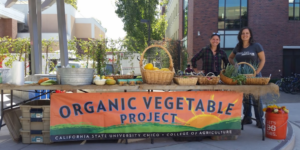 Chico State University Organic Vegetable Project, Grazing for Change, Holistic Management
