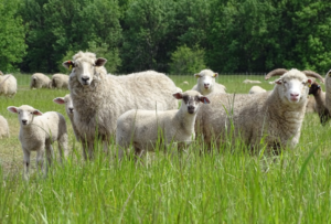 Farmland LP, regenerative agriculture, holistic management, grazing for change