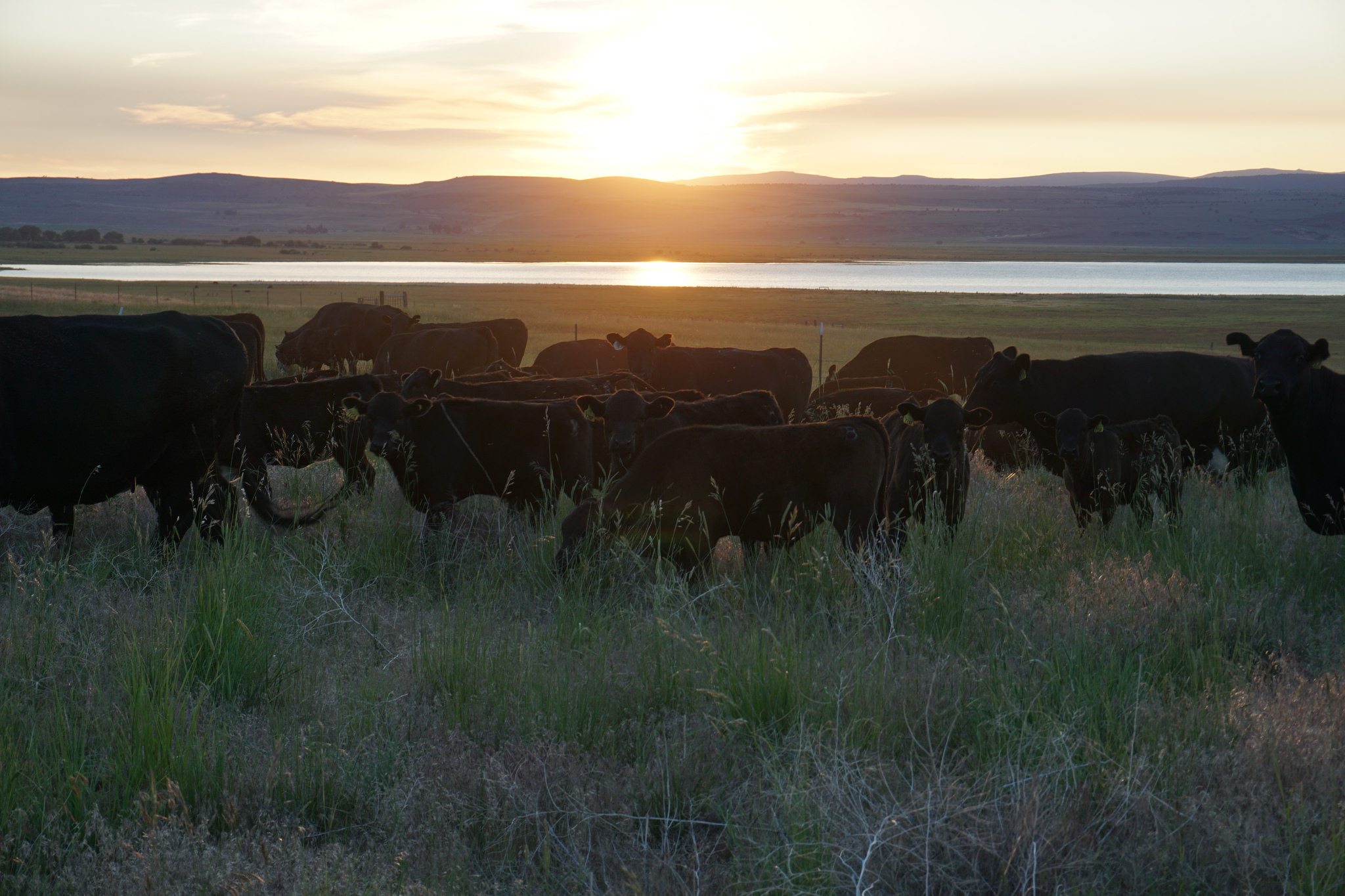 Jefferson Center for Holistic Management, Springs Ranch, grass-fed beef