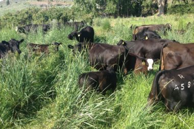 Holistic Planned Grazing, forage production, livestock gains