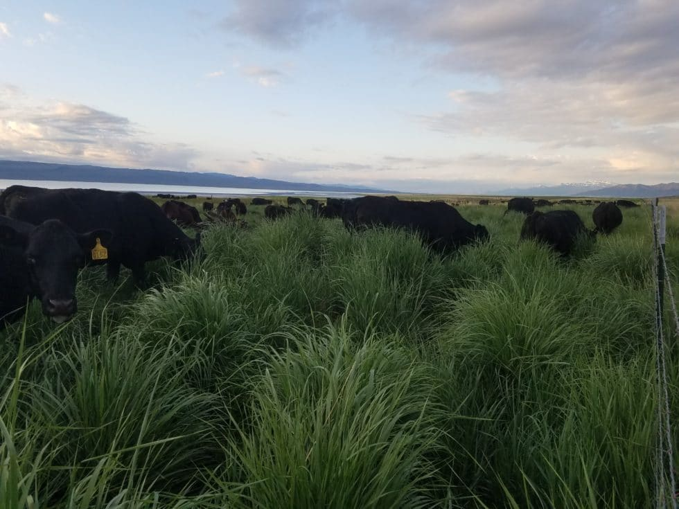 How farmers, ranchers, land owners and managers could use EOV Webinar